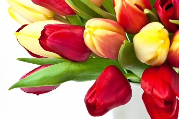 Ramo de tulipanes rojos y amarillos