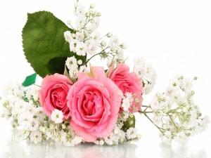 Postal: Bellas flores rosas y blancas