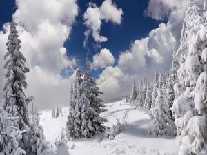 Postal: Bosque nevado