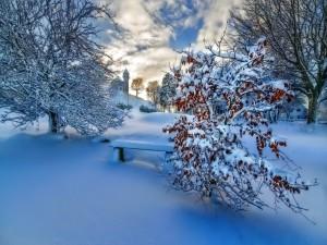 Árboles, casas y banco cubiertos con nieve