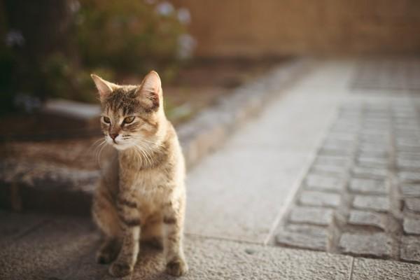 Bonito gato en la calle