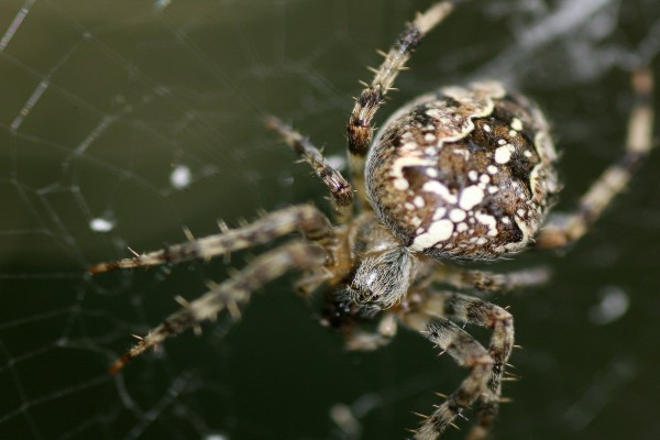 Una araña en la tela