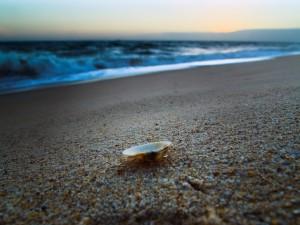 Una concha en la arena de la playa