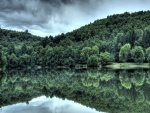 Árboles verdes reflejados en el lago