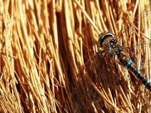 Postal: Libélula sobre los palos secos