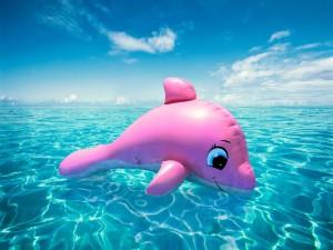 Postal: Delfín rosa en el agua