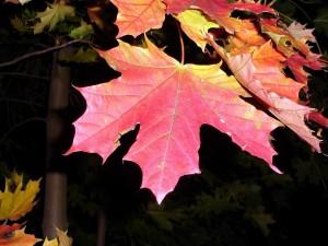Hojas rojas en otoño