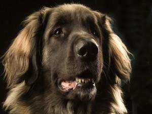 Postal: La cara de un perro