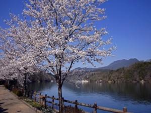 Árboles al lado del río