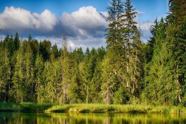 Árboles verdes reflejados en el agua