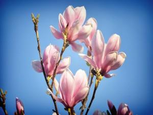 Postal: Ramas con bonitas flores