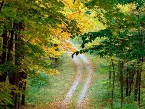 El camino del bosque en otoño