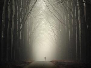 Paseo hacia la niebla