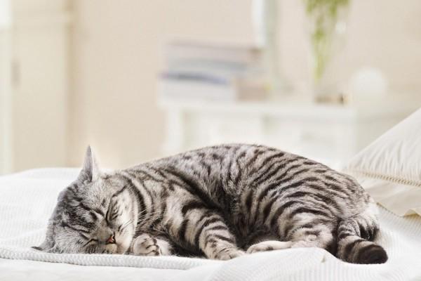 Gato dormido sobre la cama