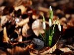 Flores brotando entre hojas secas