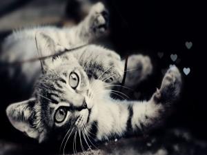 Gato y corazones