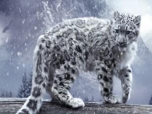 Pequeño leopardo de las nieves