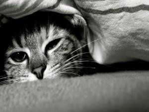 Postal: Gato en su escondite