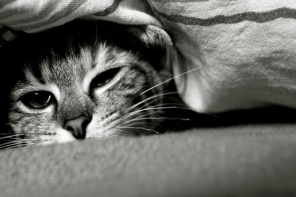 Gato en su escondite