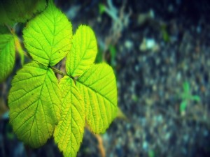 Postal: Rama con hojas verdes