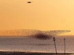 Nube de pájaros volando sobre la playa