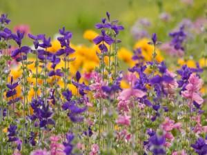 Postal: Flores alargadas de colores