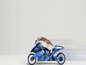 Postal: Ratón motero