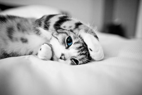 Foto en blanco y negro de un gatito