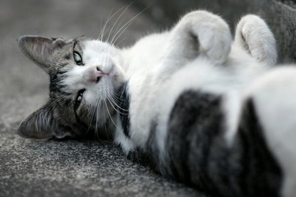 Gato tumbado en el suelo