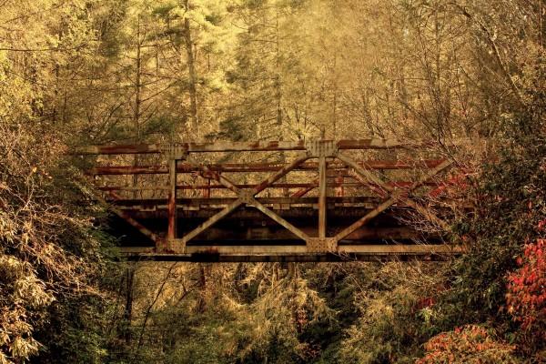 Puente entre árboles