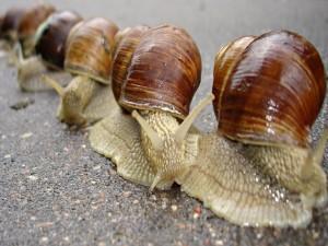 Caracoles en fila