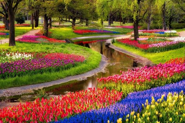 Flores en el estanque del parque