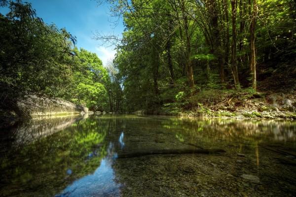 Río transparente en el bosque