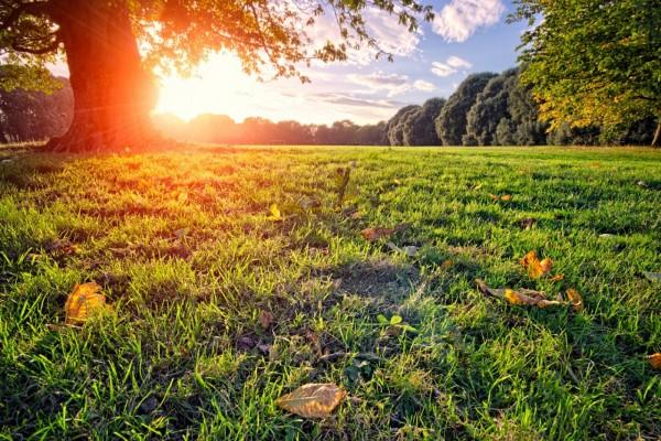 Rayos del sol sobre la hierba