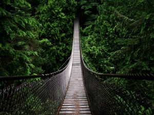 Postal: Puente colgante entre árboles