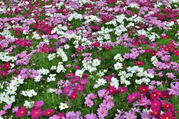 Margaritas de colores en la hierba