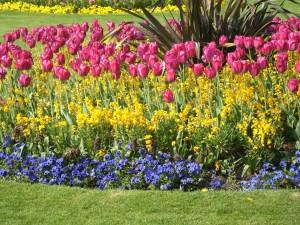Postal: Tulipanes y otras flores decorando un jardín