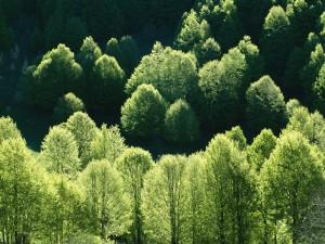 Postal: Árboles verdes