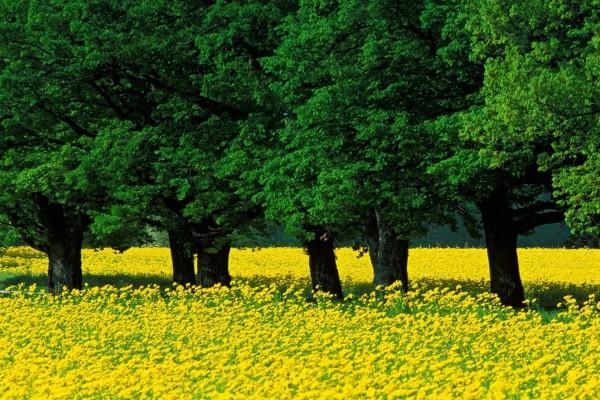 Árboles verdes y flores amarillas