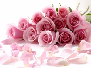 Rosas y pétalos de color rosa