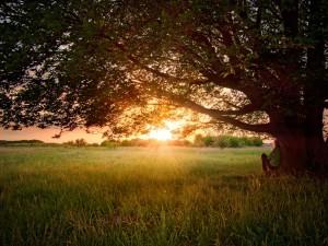 Contemplando el atardecer bajo el árbol