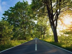 Postal: Carretera entre árboles
