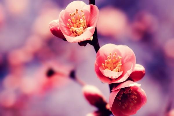 Rama con tres pequeñas flores rosadas
