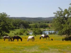 Caballos en la pradera floreada