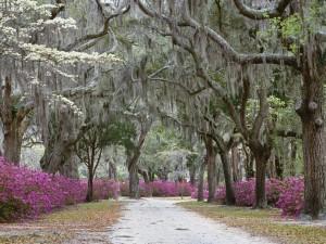 Camino bajo los árboles del parque