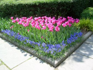 Postal: Esquina de un jardín con tulipanes