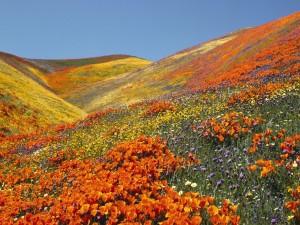 Campo con flores naranjas, amarillas y moradas