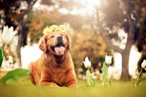 Perro con flores en la cabeza