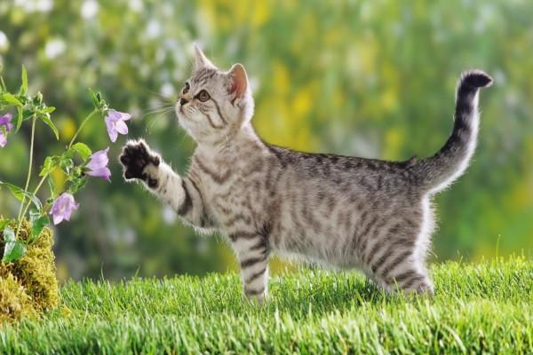 Un lindo gato junto a unas flores