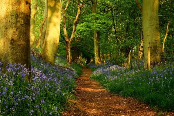 Paseo entre árboles y flores